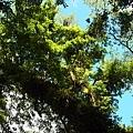 101.07.28 拉拉山森林遊樂區101