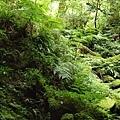 101.07.28 拉拉山森林遊樂區109