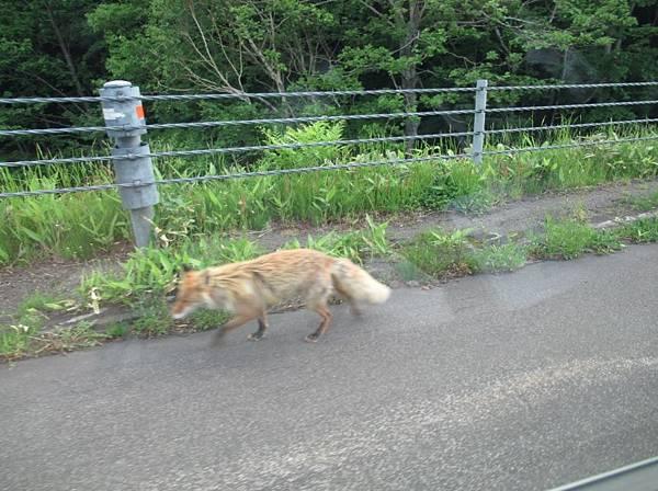 北海道 (414).JPG