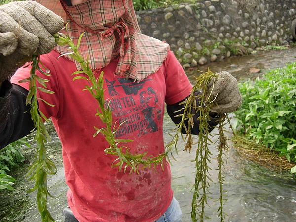 它很長且 草+水=更重.JPG