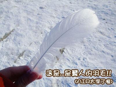 白色羽毛,好美
