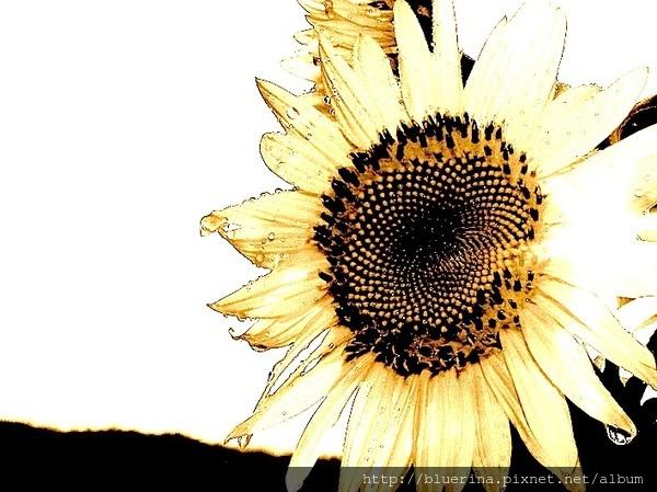 2014 太陽花.jpg