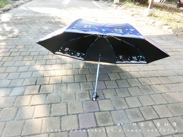 傘001.JPG