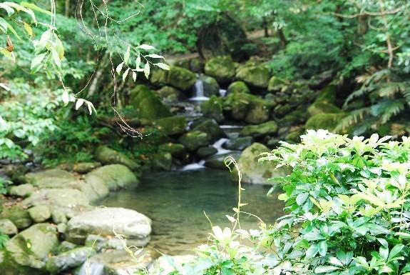 桃園仙谷水景
