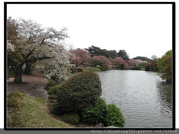 東京《新宿御苑》18.jpg