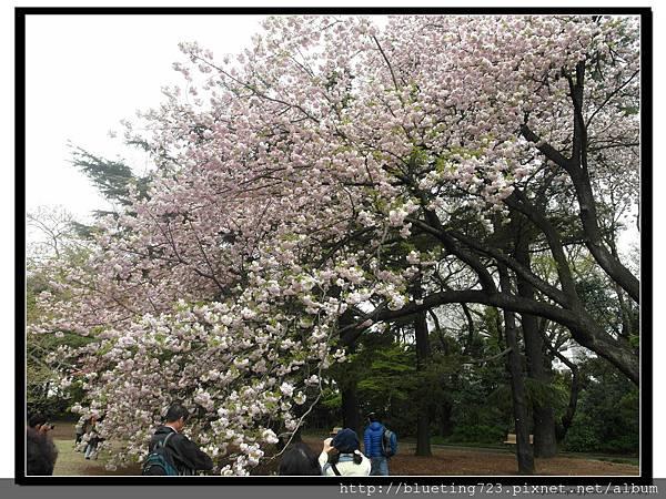東京《新宿御苑》3.jpg