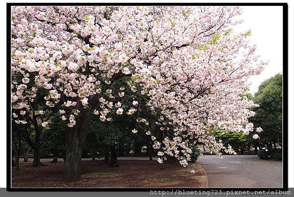 東京《新宿御苑》8.jpg