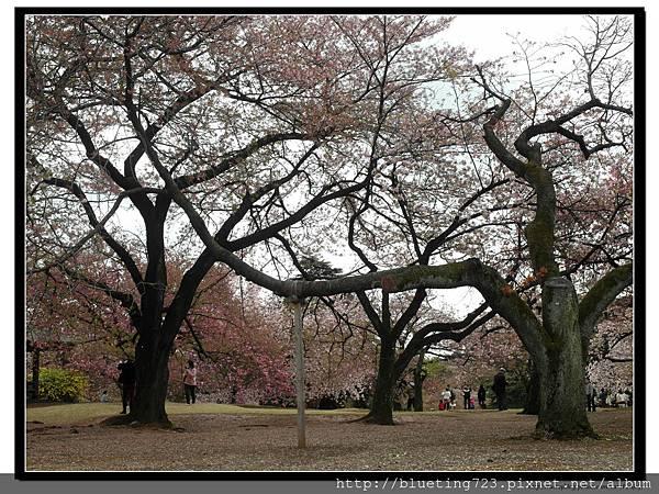 東京《新宿御苑》12.jpg