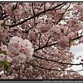 東京《新宿御苑》14.jpg