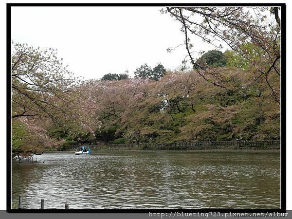 東京《吉祥寺 井之頭恩賜公園》5.jpg