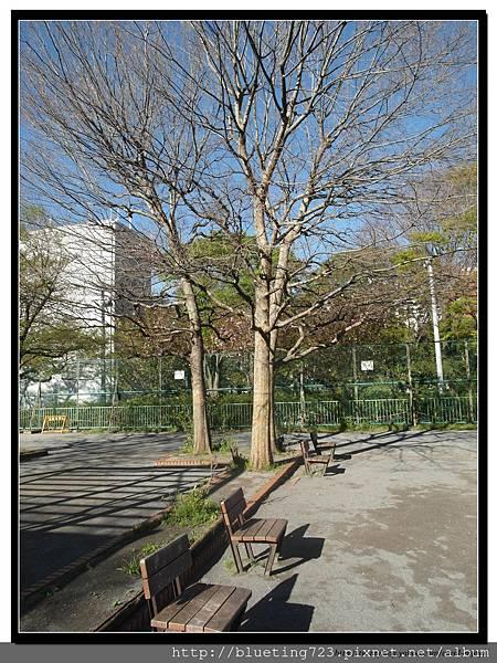東京《新宿中央公園》4.jpg