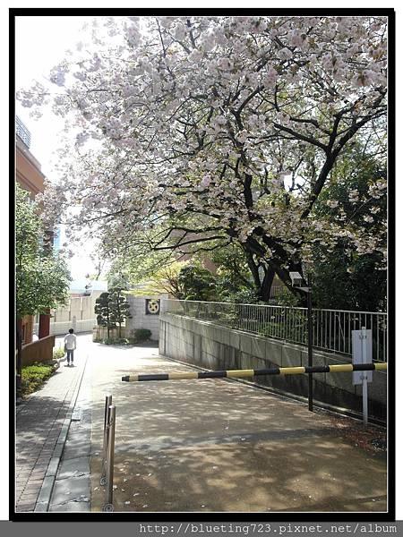 東京《東鄉神社》1.jpg