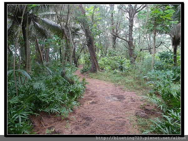 美國關島《瑞提迪恩岬Ritidian Point》樹叢路徑.jpg