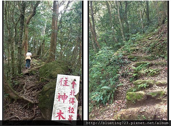 新竹尖石《北得拉曼步道》4.jpg