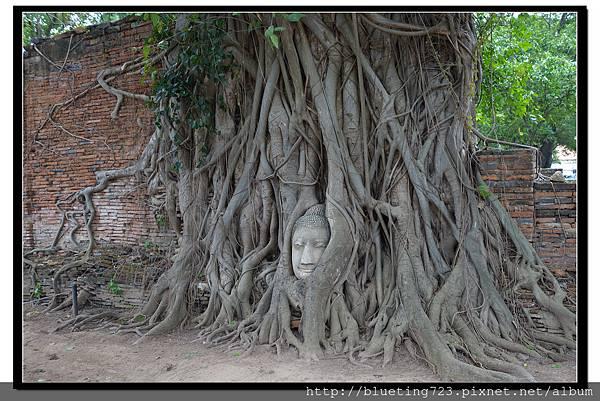 泰國大城府《Ayutthaya大城》瑪哈泰寺WAT MAHATHAT 6.jpg