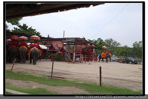 泰國大城府《Ayutthaya大城》騎大象1.jpg