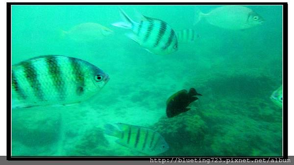 沙巴亞庇《沙比島Sapi》25.jpg
