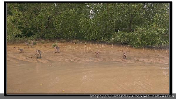 沙巴亞庇《威士頓濕地Weston》19.jpg