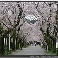 九州福岡《秋月城跡》3.jpg