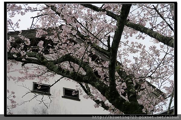 九州福岡《秋月城跡》4.jpg