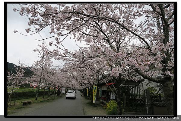 九州福岡《秋月城跡》6.jpg