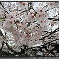 九州福岡《秋月城跡》7.jpg