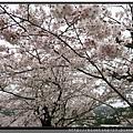九州福岡《秋月城跡》8.jpg