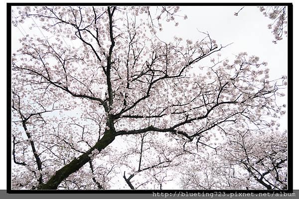 九州福岡《秋月城跡》11.jpg