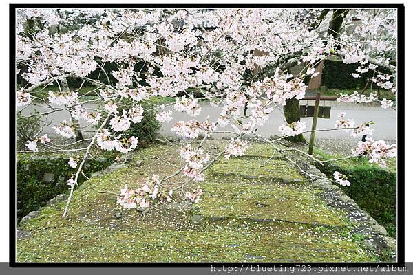 九州福岡《秋月城跡》13.jpg
