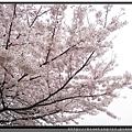九州福岡《西公園》12.jpg