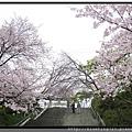 九州福岡《西公園》光雲神社3.jpg