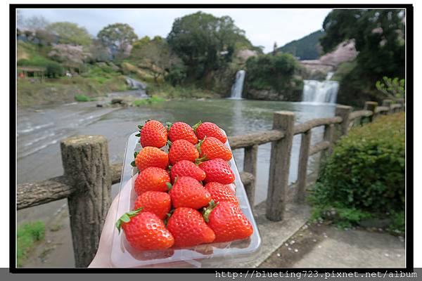 九州佐賀《嬉野溫泉》轟之瀑布公園 21.jpg