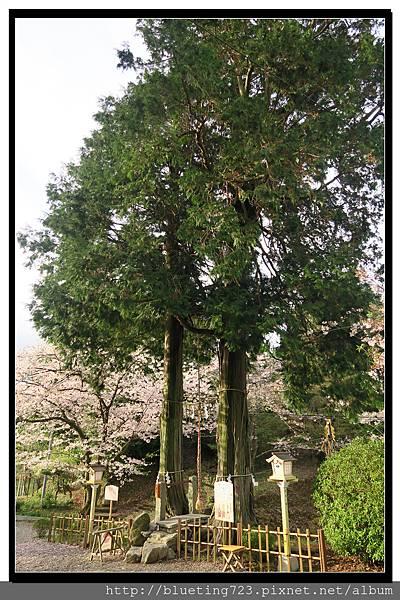 九州佐賀《武雄神社》3.jpg