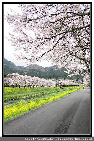 九州《由布院櫻花散策》6.jpg