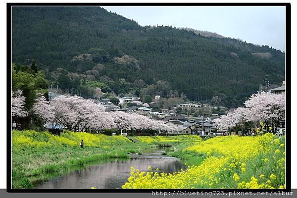 九州《由布院櫻花散策》7.jpg