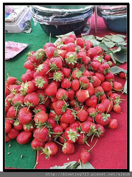 西安《草莓》.jpg