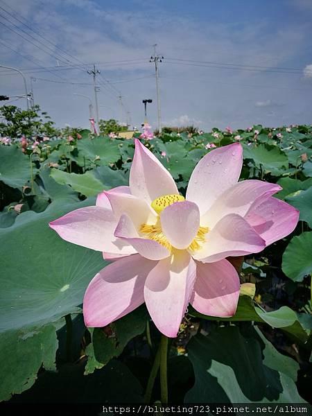 台南《白河蓮花》3.jpg