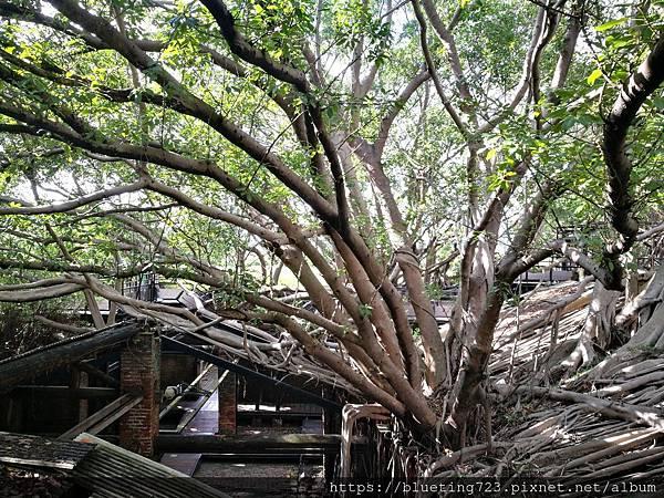 台南《安平樹屋》2.jpg