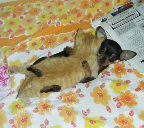 doggie kitten