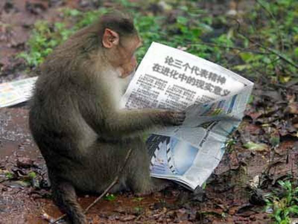 峨嵋山上的猴子.jpg