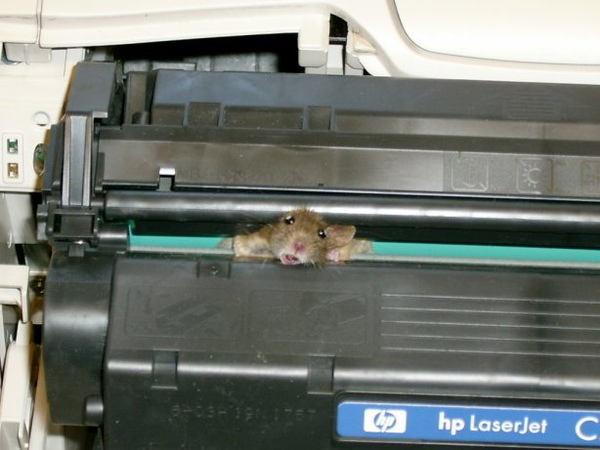 hp mouse1.jpg