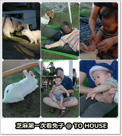 2009.09.06 兔子餐廳-1.jpg