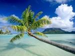 椰子沙灘.jpg