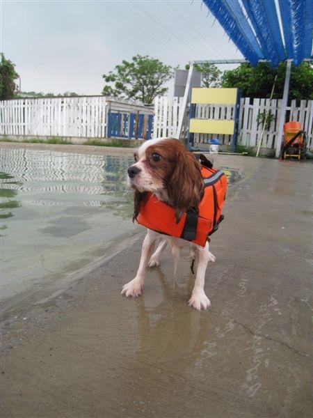 穿上救生衣!(第一次怕溺水嘛...)