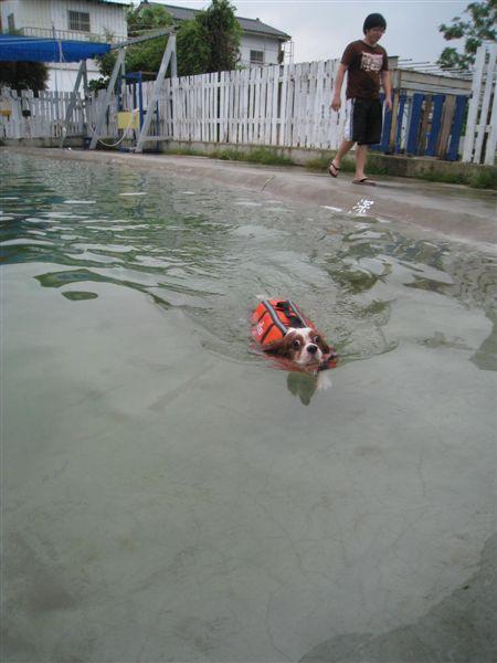 游得不錯啊