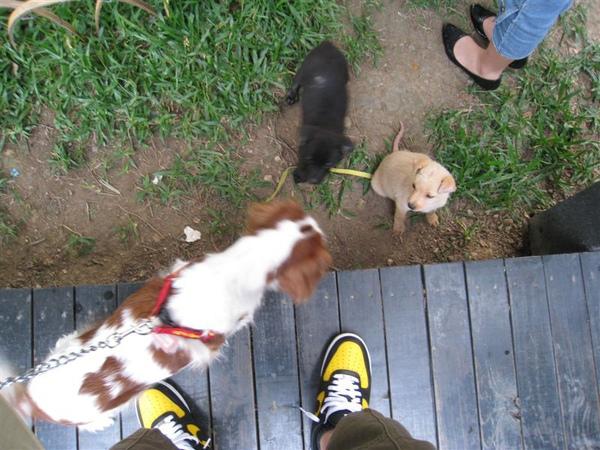 薰衣草森林裡的超可愛小狗狗