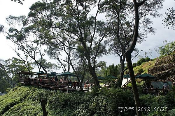 首烏 森林鳥花園 31.JPG