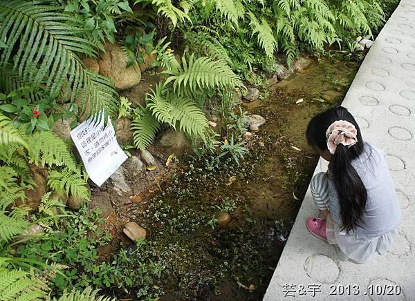首烏 森林鳥花園 35.JPG