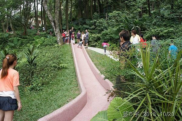 首烏 森林鳥花園 36.JPG