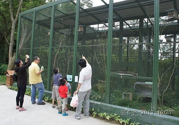 首烏 森林鳥花園 40.JPG